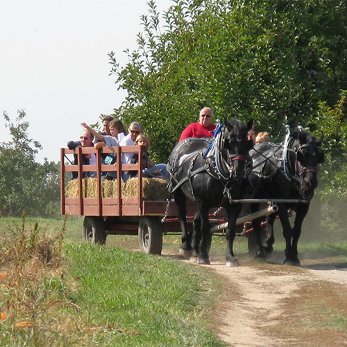 Hop aboard a fall fun wagon ride through our real working orchard in Grand Rapids at Moelker Orchards.